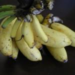 モンキーバナナはやはり美味い