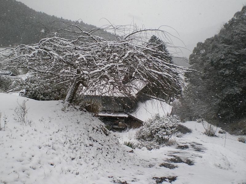 yukikigi150101