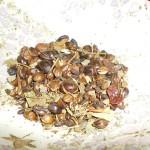 南阿蘇農園の健康茶(Kenkou-Cha)
