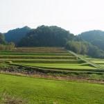 姶良市、蒲生町米丸上の田園風景