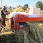 かけ干し米にこだわる伊佐市、南農園のお米はおいしいよ(2015脱穀)