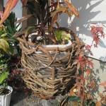 葛で鉢籠を作る2016.01.03