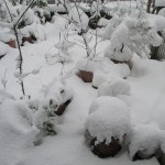姶良市西餅田に雪が降る(2016.01.24)