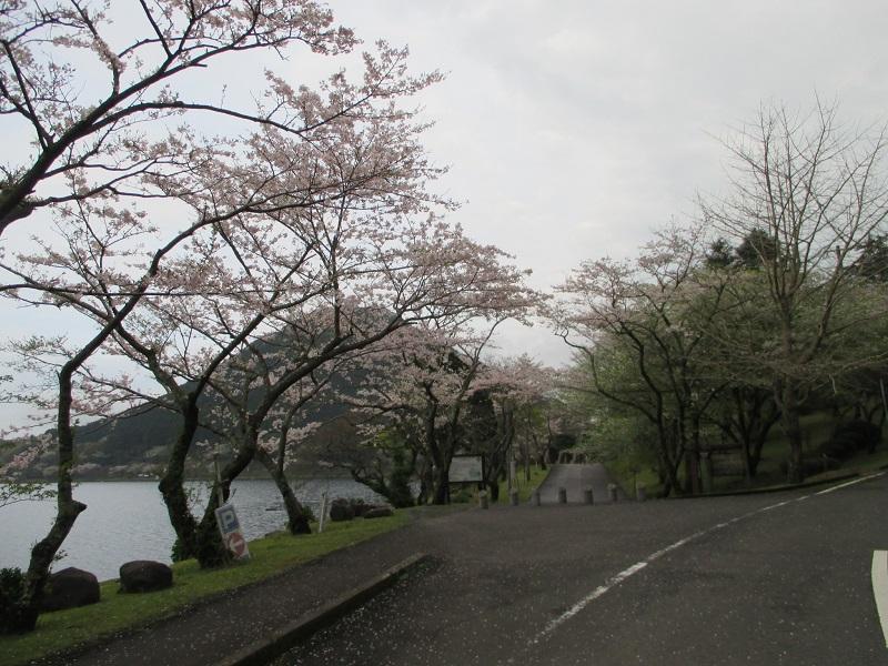 170409iimoriyamatosakura