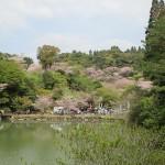 いちき串木野市「観音ヶ池 市民の森」の桜 2018.03.31